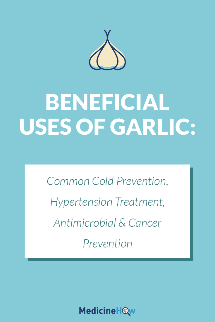 Beneficial Uses of Garlic: Common Cold Prevention, Hypertension Treatment, Antimicrobial & Cancer Prevention
