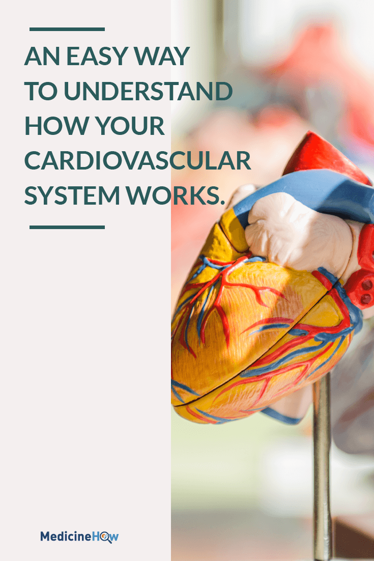 An easy way to understand how your cardiovascular system works.