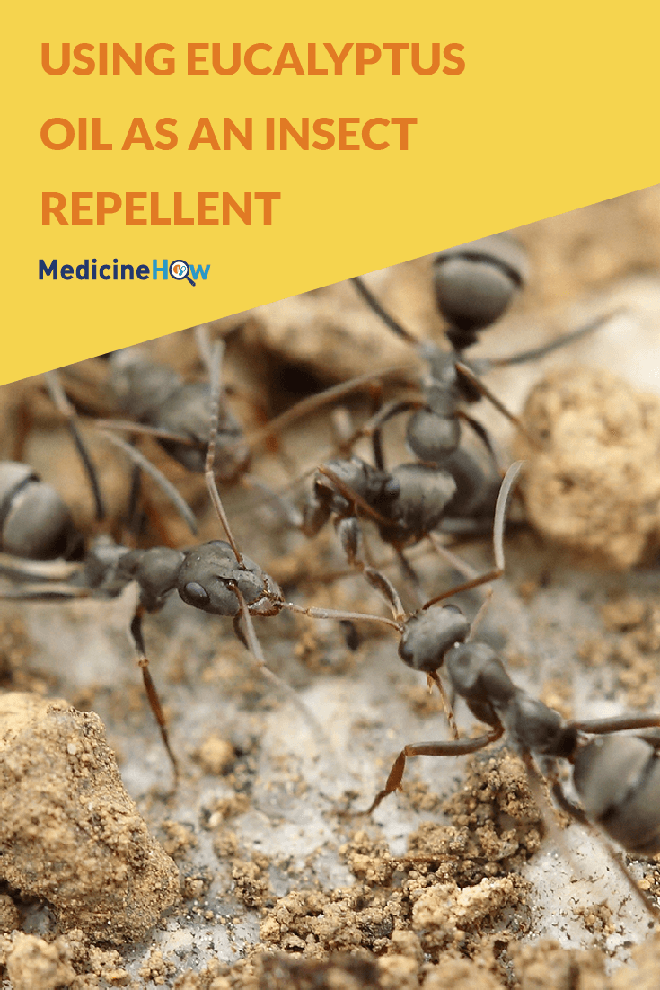 Using Eucalyptus Oil as an insect repellent