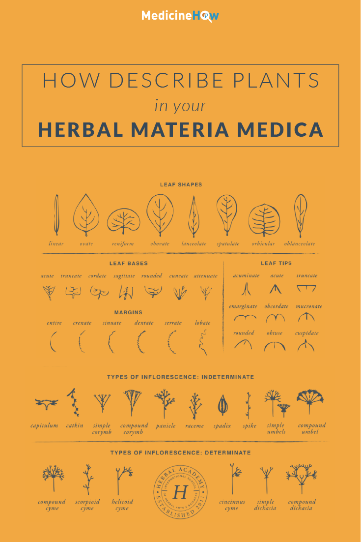 How Describe Plants in Your Herbal Materia Medica