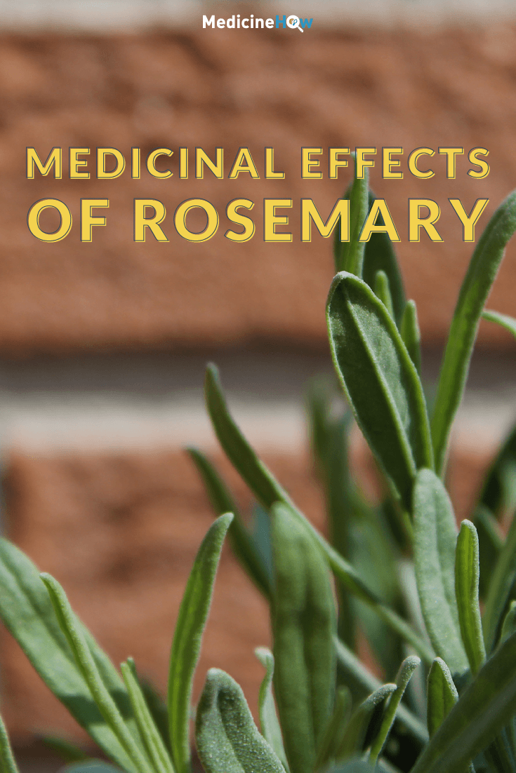 Medicinal Effects of Rosemary