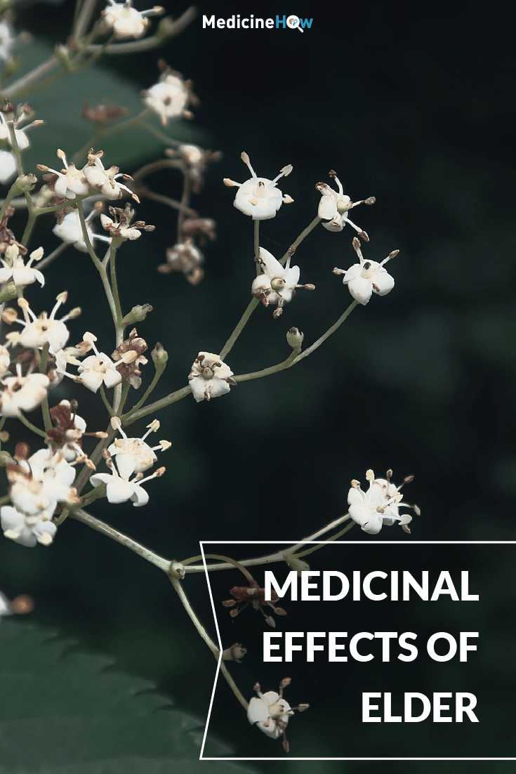 Medicinal Effects of Elder